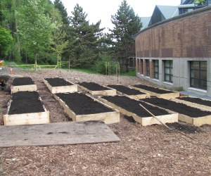 Raised Garden beds at the UofW P-Patch